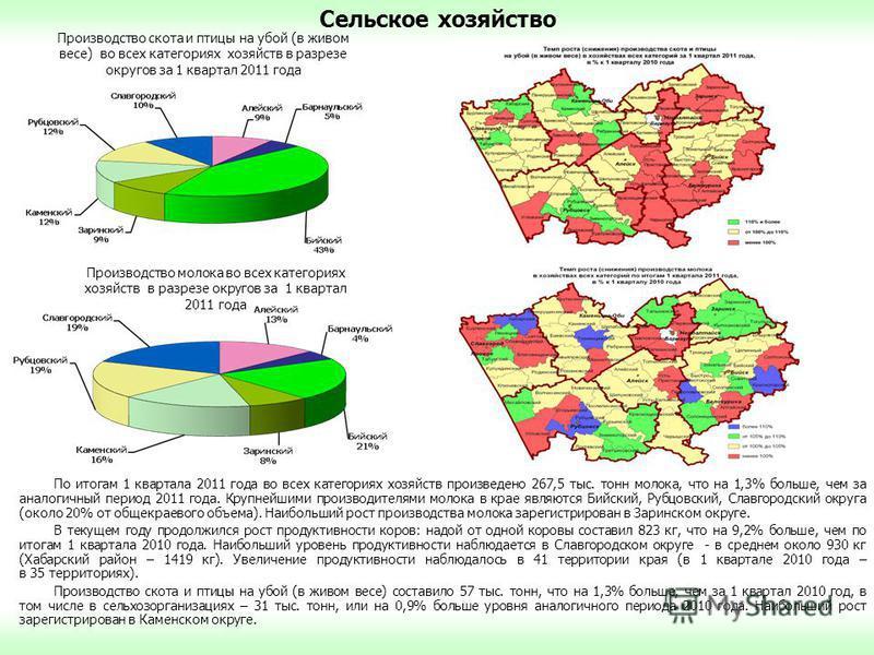 Сельское хозяйство По итогам 1 квартала 2011 года во всех категориях хозяйств произведено 267,5 тыс. тонн молока, что на 1,3% больше, чем за аналогичный период 2011 года. Крупнейшими производителями молока в крае являются Бийский, Рубцовский, Славгор