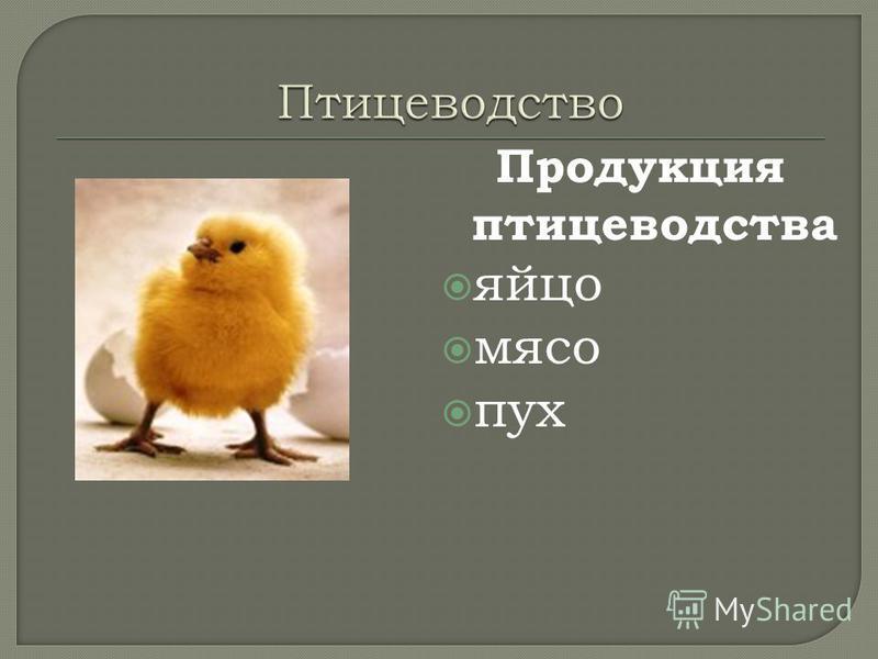 Продукция птицеводства яйцо мясо пух