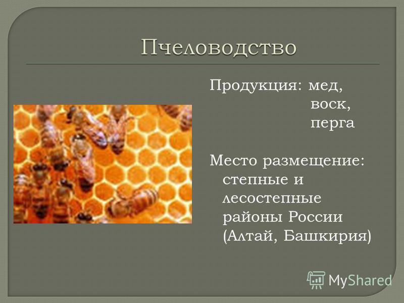 Продукция: мед, воск, перга Место размещение: степные и лесостепные районы России (Алтай, Башкирия)