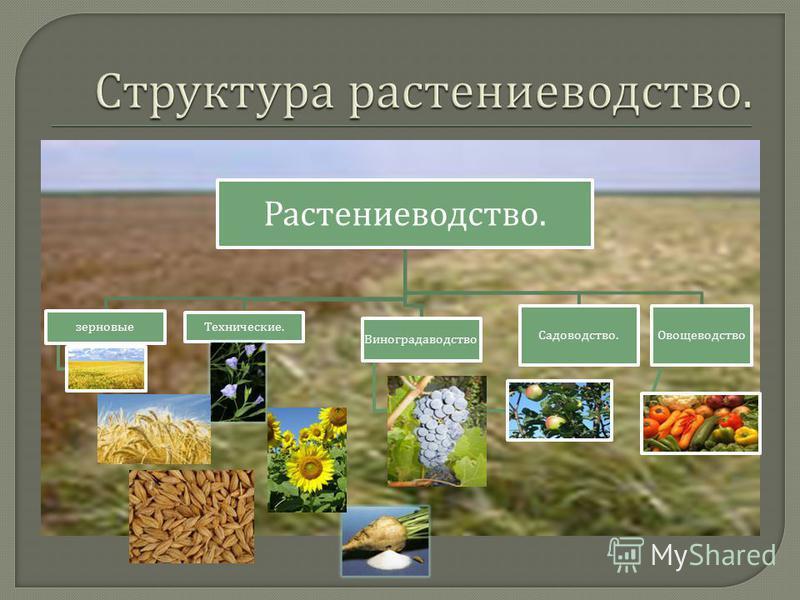 Растениеводство. зерновые Технические. Виноградаводство Садоводство. Овощеводство