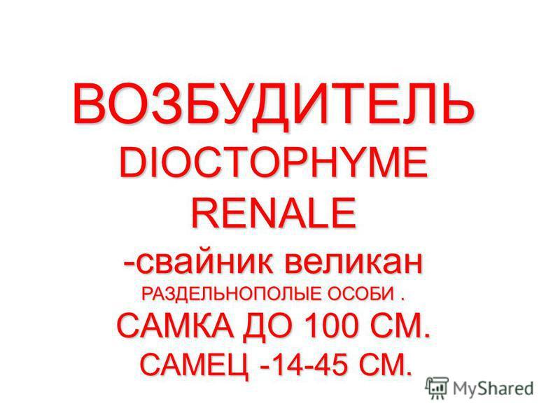 ВОЗБУДИТЕЛЬ DIOCTOPHYME RENALE -свайник великан РАЗДЕЛЬНОПОЛЫЕ ОСОБИ. САМКА ДО 100 СМ. САМЕЦ -14-45 СМ.