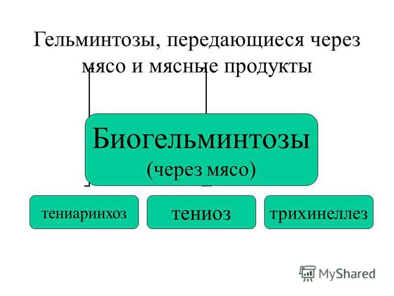 Гельминтозы, передающиеся через мясо и мясные продукты Биогельминтозы (через мясо) тениаринхоз тениоз трихинеллез