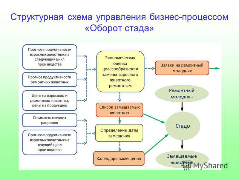 Структурная схема управления бизнес-процессом «Оборот стада»
