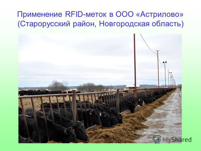 Применение RFID-меток в ООО «Астрилово» (Старорусский район, Новгородская область)