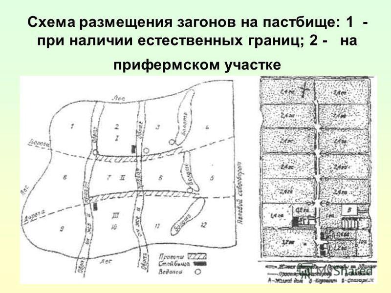 Схема размещения загонов на пастбище: 1 - при наличии естественных границ; 2 - на прифермском участке