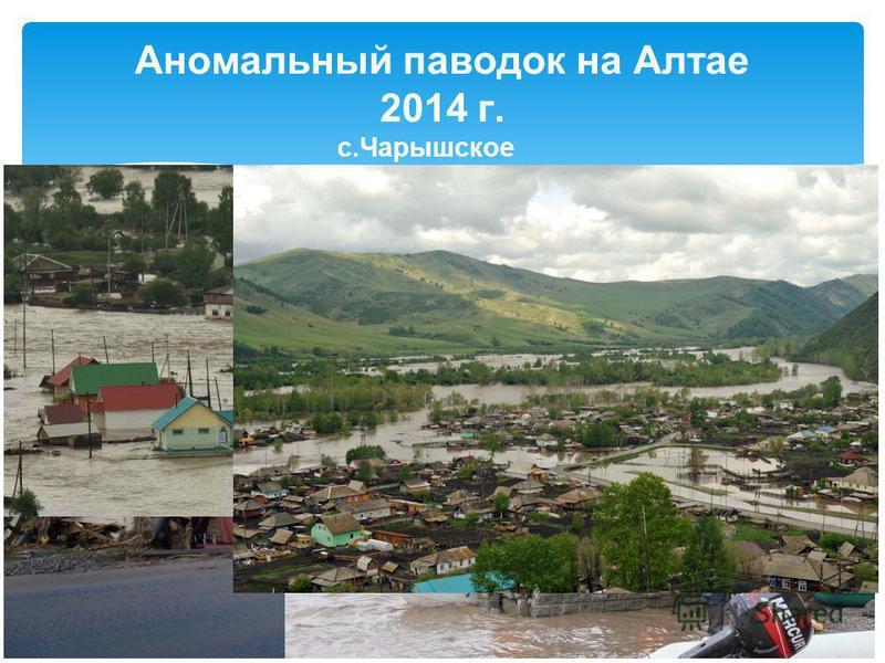 Аномальный паводок на Алтае 2014 г. с.Чарышское