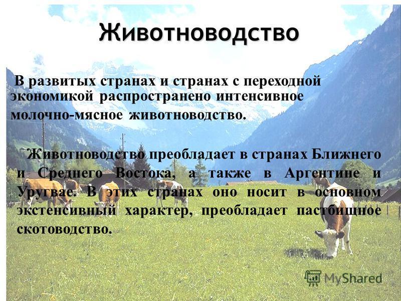 Животноводство В развитых странах и странах с переходной экономикой распространено интенсивное молочно-мясное животноводство. Животноводство преобладает в странах Ближнего и Среднего Востока, а также в Аргентине и Уругвае. В этих странах оно носит в