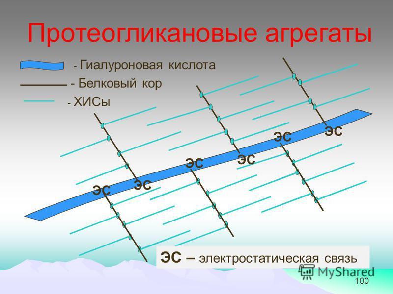 100 - Гиалуроновая кислота - Белковый кор - ХИСы ЭС ЭС – электростатическая связь Протеоглинкановые агрегаты