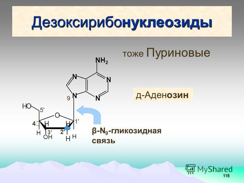 118 Дезоксирибонуклеозиды N N N N NН 2 O H OН HH H H HO д-Аденозин β-N 9 -глинкозидная связь 1 9 2 3 4 5 тоже Пуриновые