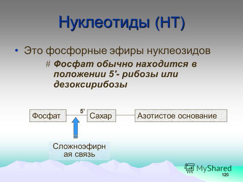 120 Нуклеотиды (НТ) Это фосфорные эфиры нуклеозидов # Фосфат обычно находится в положении 5- рибозы или дезоксирибозы Сложноэфирн ая связь Фосфат Сахар Азотистое основание 5