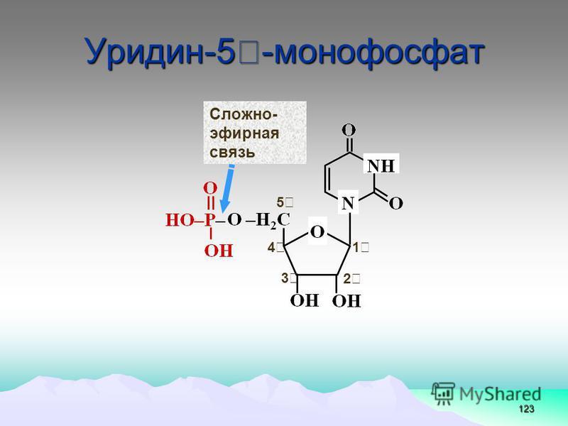 Уридин-5-монофосфат 123 5 1 2 3 4 Сложно- эфирная связь
