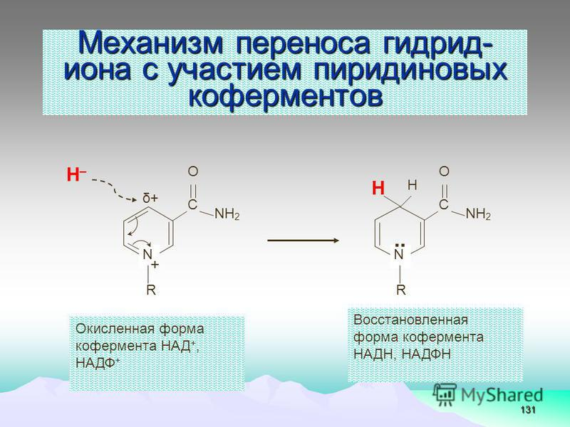131 Механизм переноса гидрид- иона с участием пиридиновых коферментов Н–Н– NН2NН2 N С O R + δ+δ+ NН2NН2 N С O R.. Н Н Окисленная форма кофермента НАД +, НАДФ + Восстановленная форма кофермента НАДН, НАДФН