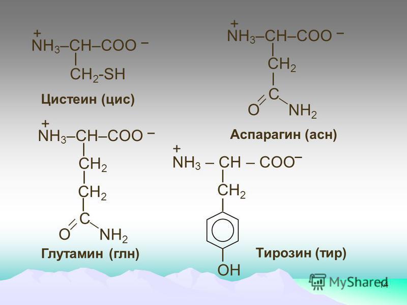 14 Цистеин (цис) + СН 2 -SН NH 3 –СН–COO Аспарагин (асн) + СН 2 NH 3 –СН–COO С О NH 2 Глутамин (глен) + СН 2 NH 3 –СН–COO С О NH 2 СН 2 Тирозин (тир) СН 2 NH 3 – СН – COO + ОН