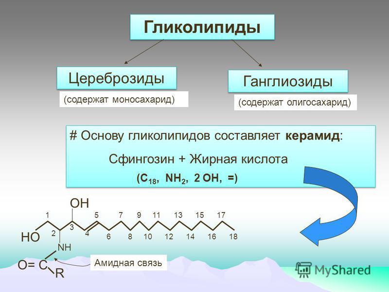 Гликолипиды Цереброзиды Ганглинозиды (содержат моносахарид) (содержат олигосахарид) # Основу глинколипидов составляет керамид: Сфингозин + Жирная кислота (C 18, NH 2, 2 OH, =) # Основу глинколипидов составляет керамид: Сфингозин + Жирная кислота (C 1