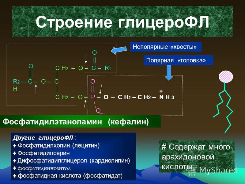163 Строение глинцероФЛ С Н 2 – О – С – R 1 R 2 – С – О – С Н С Н 2 – О – Р – О О О О О – С Н 2 – С Н 2 – N Н 3 + Фосфатидилэтаноламин (кефалин) Полярная «головка» Неполярные «хвосты» # Содержат много арахидоновой кислоты Другие глинцероФЛ : Фосфатид