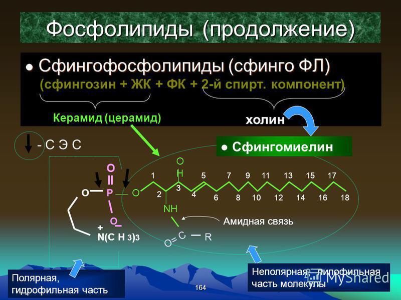 164 Фосфолипиды (продолжение) Сфингофосфолипиды (сфинго ФЛ) Сфингофосфолипиды (сфинго ФЛ) (сфингозин + ЖК + ФК + 2-й спирт. компонент) Керамид (церамид) холин OHOH O NH O= C R Амидная связь 18 1 2 3 4 5 6 7 8 9 10 11 12 13 14 15 16 17 Р O O О N(С Н 3