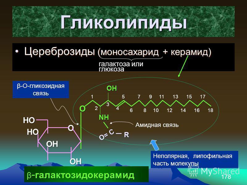 178 Гликолипиды Цереброзиды (моносахарид + керамид)Цереброзиды (моносахарид + керамид) галактоза или глюкоза OH O NH O= C R Амидная связь 18 1 2 3 4 5 6 7 8 9 10 11 12 13 14 15 16 17 Неполярная, липофильная часть молекулы О НО НО ОН ОН β-О-глинкозидн