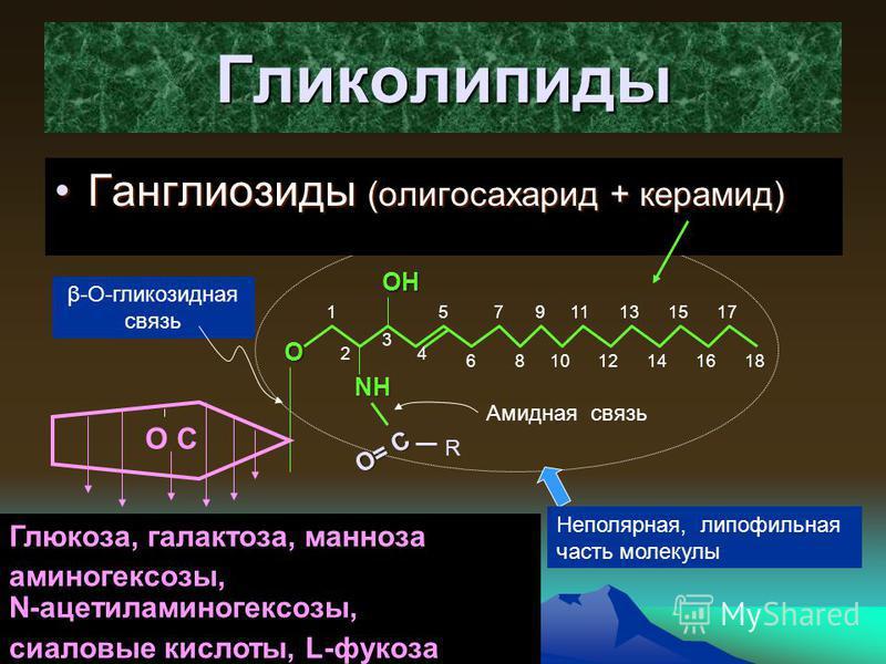 179 Гликолипиды Ганглинозиды (олигосахарид + керамид)Ганглинозиды (олигосахарид + керамид) OH O NH O= C R Амидная связь 18 1 2 3 4 5 6 7 8 9 10 11 12 13 14 15 16 17 Неполярная, липофильная часть молекулы О С Глюкоза, галактоза, манноза аминогексозы,