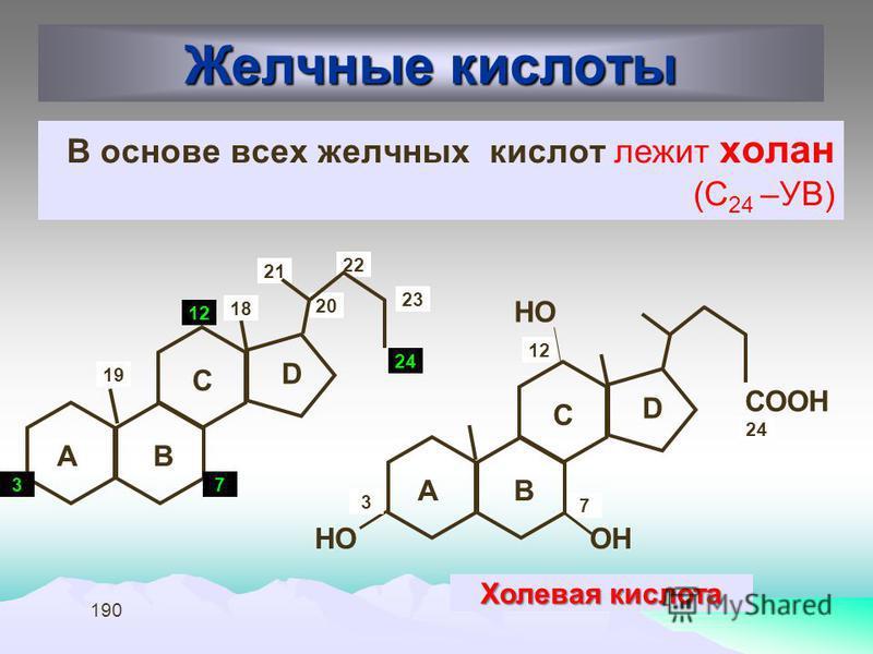 190 Желчные кислоты В основе всех желчных кислот лежит холан (С 24 –УВ) AB C D 3 20 1818 1919 21 22 24 7 1212 AB C D 7 1212 СООН ОННО Холевая кислота 23 3