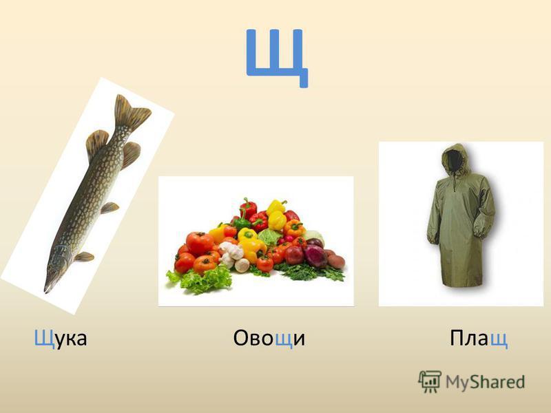 Щ Щука Овощи Плащ