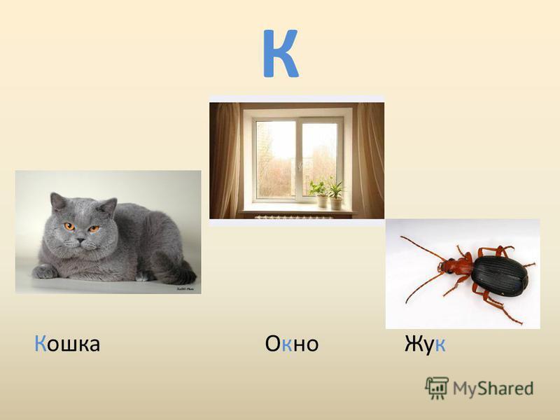 К Кошка Окно Жук
