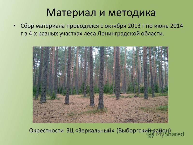 Сбор материала проводился с октября 2013 г по июнь 2014 г в 4-х разных участках леса Ленинградской области. Материал и методика Окрестности ЗЦ «Зеркальный» (Выборгский район)
