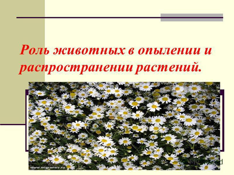 Роль животных в опылении и распространении растений.