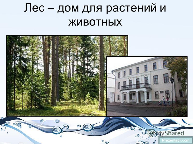 Лес – дом для растений и животных Prezentacii.com