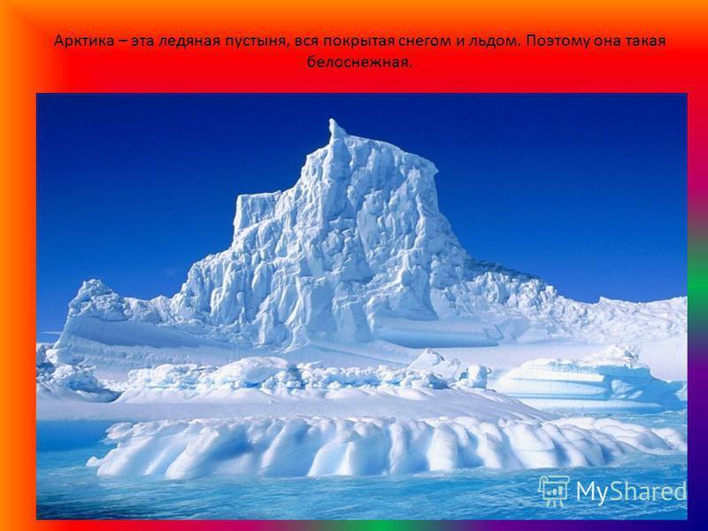 Арктика – эта ледяная пустыня, вся покрытая снегом и льдом. Поэтому она такая белоснежная.