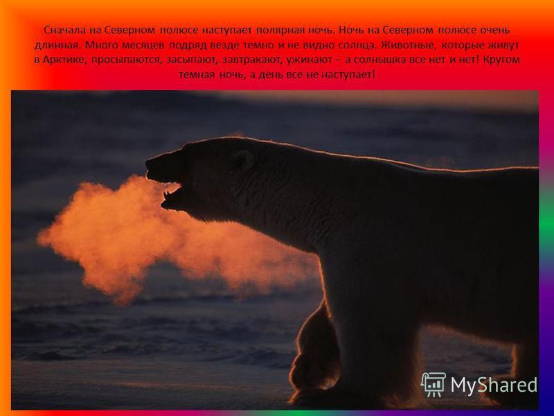 Сначала на Северном полюсе наступает полярная ночь. Ночь на Северном полюсе очень длинная. Много месяцев подряд везде темно и не видно солнца. Животные, которые живут в Арктике, просыпаются, засыпают, завтракают, ужинают – а солнышка все нет и нет! К