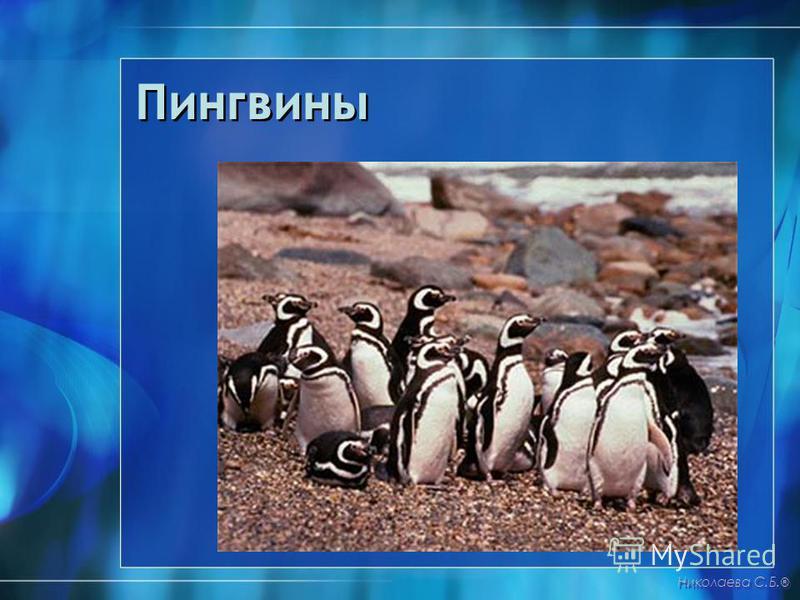 Пингвины Николаева С.Б. ®