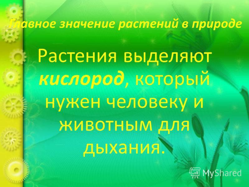 Главное значение растений в природе Растения выделяют кислород, который нужен человеку и животным для дыхания.
