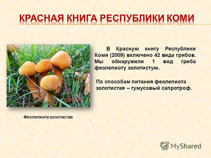 В Красную книгу Республики Коми (2009) включено 42 вида грибов. Мы обнаружили 1 вид гриба феолепиоту золотистую. По способам питания феолепиота золотистая – гумусовый сапротроф. Феолепиота золотистая