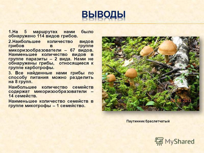 1. На 5 маршрутах нами было обнаружено 114 видов грибов. 2. Наибольшее количество видов грибов в группе микоризообразователи – 67 видов. Наименьшее количество видов в группе паразиты – 2 вида. Нами не обнаружены грибы, относящиеся к группе карботрофы