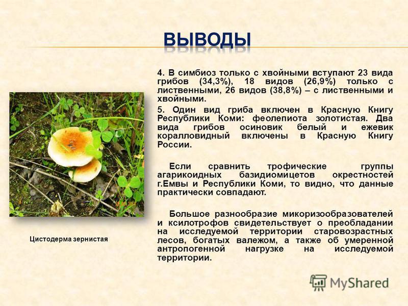4. В симбиоз только с хвойными вступают 23 вида грибов (34,3%), 18 видов (26,9%) только с лиственными, 26 видов (38,8%) – с лиственными и хвойными. 5. Один вид гриба включен в Красную Книгу Республики Коми: феолепиота золотистая. Два вида грибов осин