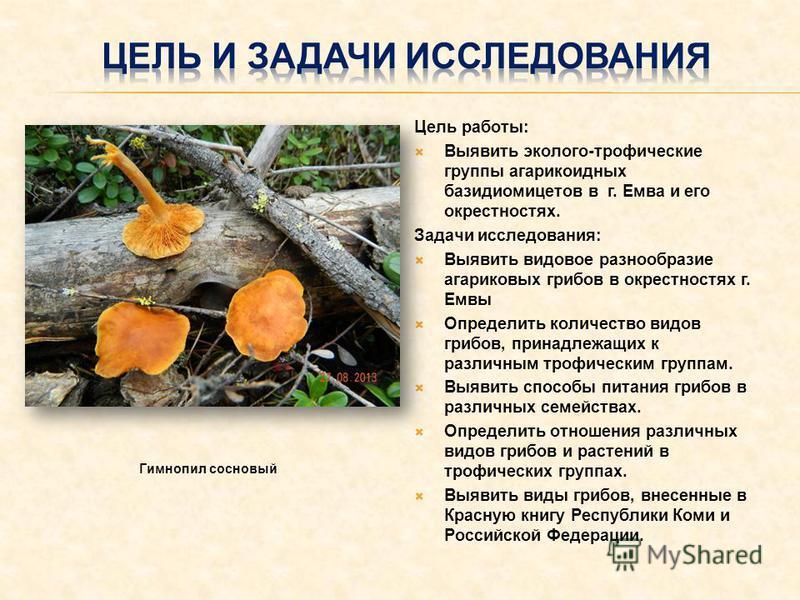 Цель работы: Выявить эколого-трофические группы агарикоидных базидиомицетов в г. Емва и его окрестностях. Задачи исследования: Выявить видовое разнообразие агариковых грибов в окрестностях г. Емвы Определить количество видов грибов, принадлежащих к р