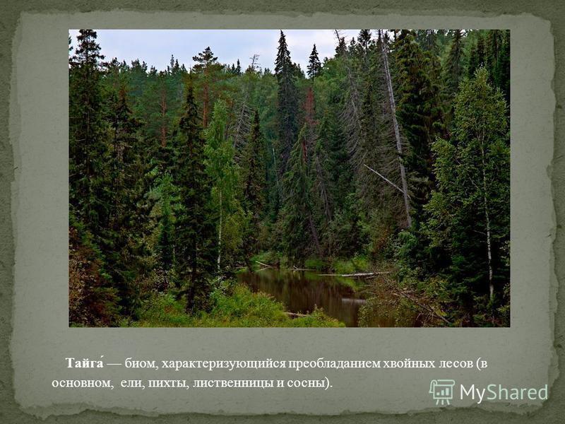 Тайга́ биом, характеризующийся преобладанием хвойных лесов (в основном, ели, пихты, лиственницы и сосны).