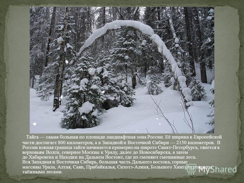 Тайга самая большая по площади ландшафтная зона России. Её ширина в Европейской части достигает 800 километров, а в Западной и Восточной Сибири 2150 километров. В России южная граница тайги начинается примерно на широте Санкт-Петербурга, тянется к ве