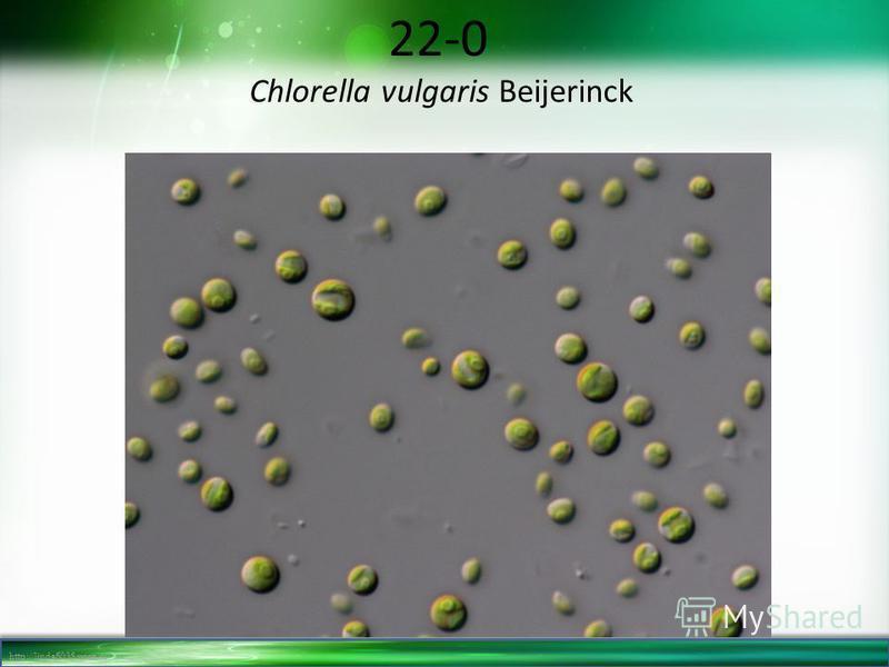 http://linda6035.ucoz.ru/ 22-0 Chlorella vulgaris Beijerinck