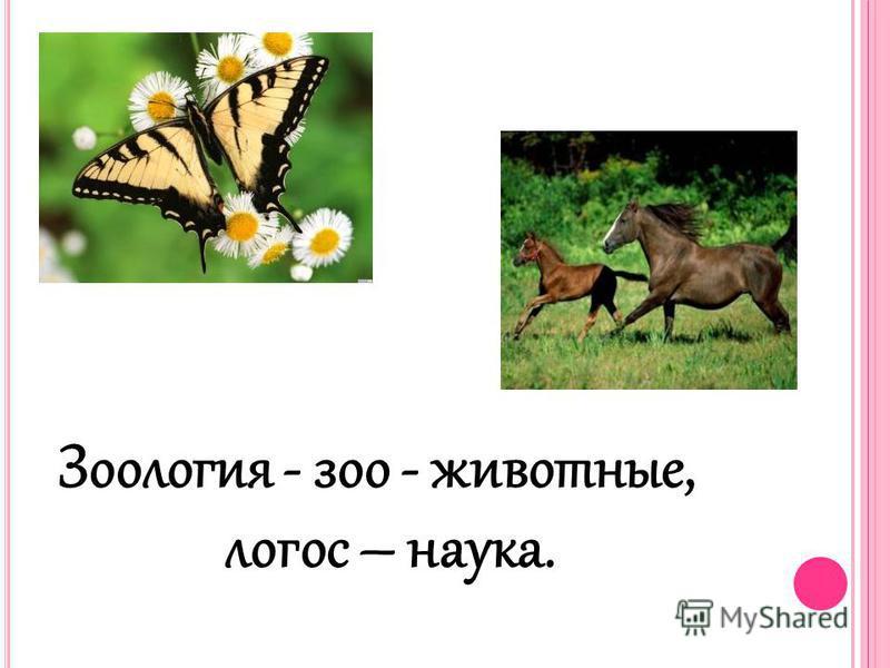Зоология - зоо - животные, логос – наука.