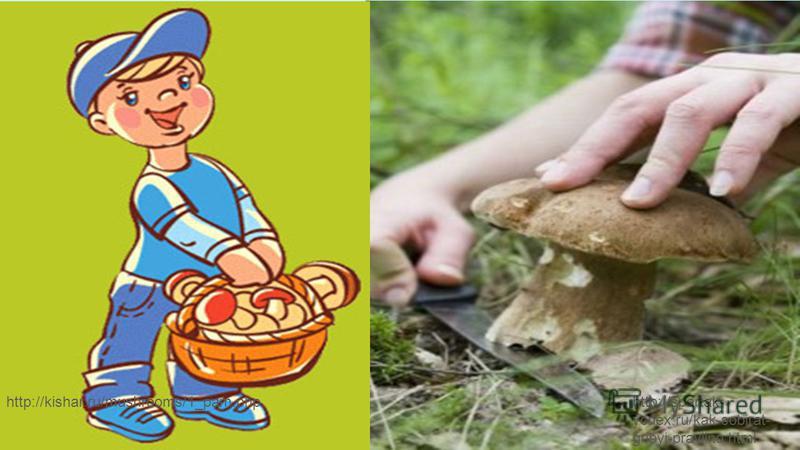 http://spartak- ycnex.ru/kak-sobirat- gribyi-pravilno.html http://kishar.ru/mushrooms/1_pam.php