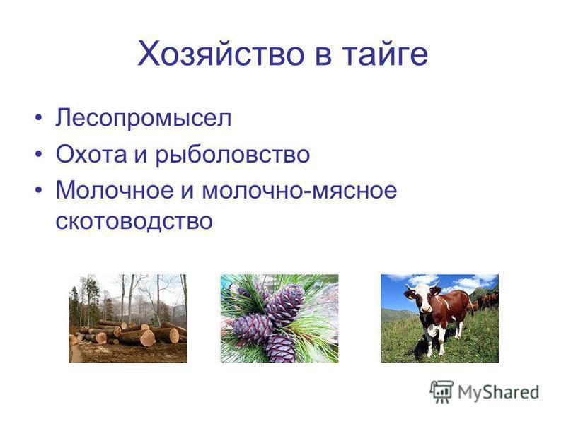 Хозяйство в тайге Лесопромысел Охота и рыболовство Молочное и молочно-мясное скотоводство