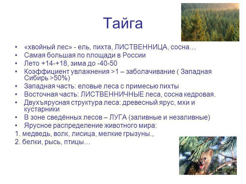 Тайга «хвойный лес» - ель, пихта, ЛИСТВЕННИЦА, сосна… Самая большая по площади в России Лето +14-+18, зима до -40-50 Коэффициент увлажнения >1 – заболачивание ( Западная Сибирь >50%) Западная часть: еловые леса с примесью пихты Восточная часть: ЛИСТВ