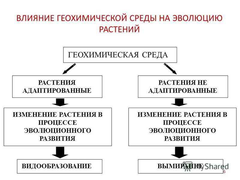 ВЛИЯНИЕ ГЕОХИМИЧЕСКОЙ СРЕДЫ НА ЭВОЛЮЦИЮ РАСТЕНИЙ ГЕОХИМИЧЕСКАЯ СРЕДА РАСТЕНИЯ АДАПТИРОВАННЫЕ ИЗМЕНЕНИЕ РАСТЕНИЯ В ПРОЦЕССЕ ЭВОЛЮЦИОННОГО РАЗВИТИЯ ВИДООБРАЗОВАНИЕ РАСТЕНИЯ НЕ АДАПТИРОВАННЫЕ ВЫМИРАНИЕ ИЗМЕНЕНИЕ РАСТЕНИЯ В ПРОЦЕССЕ ЭВОЛЮЦИОННОГО РАЗВИТИ