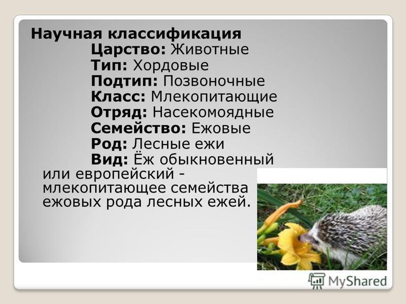 Научная классификация Царство: Животные Тип: Хордовые Подтип: Позвоночные Класс: Млекопитающие Отряд: Насекомоядные Семейство: Ежовые Род: Лесные ежи Вид: Ёж обыкновенный или европейский - млекопитающее семейства ежовых рода лесных ежей.