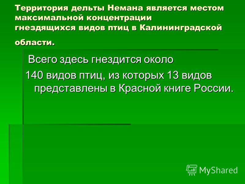 Территория дельты Немана является местом максимальной концентрации гнездящихся видов птиц в Калининградской области. Всего здесь гнездится около Всего здесь гнездится около 140 видов птиц, из которых 13 видов представлены в Красной книге России.