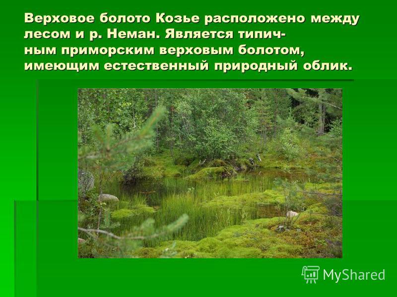 Верховое болото Козье расположено между лесом и р. Неман. Является типичным приморским верховым болотом, имеющим естественный природный облик.