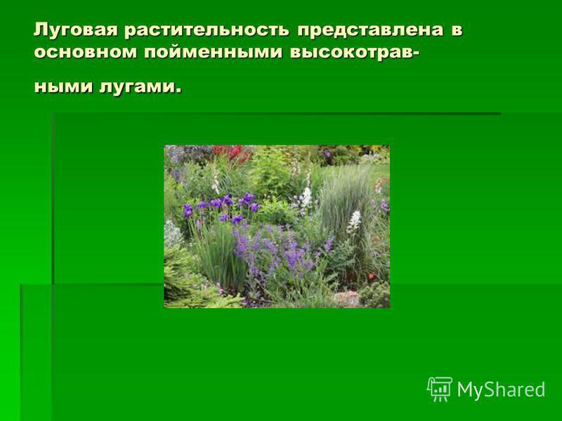 Луговая растительность представлена в основном пойменными высоко т равными лугами.