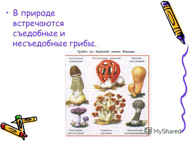 В природе встречаются съедобные и несъедобные грибы.
