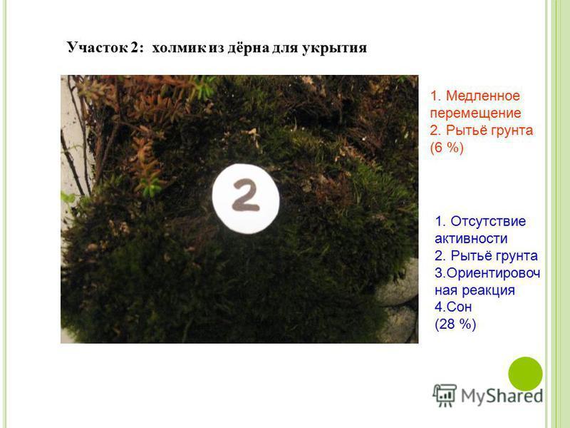 Участок 2: холмик из дёрна для укрытия 1. Медленное перемещение 2. Рытьё грунта (6 %) 1. Отсутствие активности 2. Рытьё грунта 3. Ориентировоч ная реакция 4. Сон (28 %)
